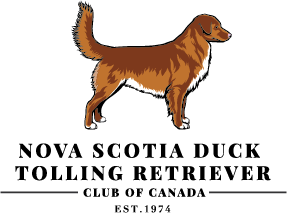 Nova Scotia Duck Tolling Retriever Club of Canada (NSDTRCC)