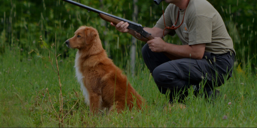 Good Hunting Dogs - Nova Scotia Duck Tolling Retriever Club of Canada - Nova Scotia Toller