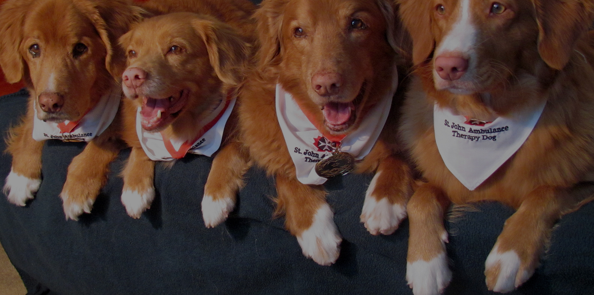 Nova Scotia Duck Tolling Retriever Club of Canada 8