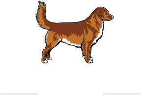 Nova Scotia Duck Tolling Retriever Club of Canada